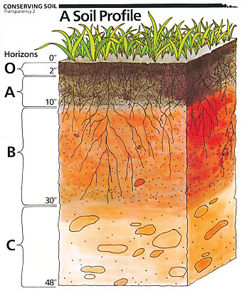 Illustration of a soil profile - Tractor Supply Co.