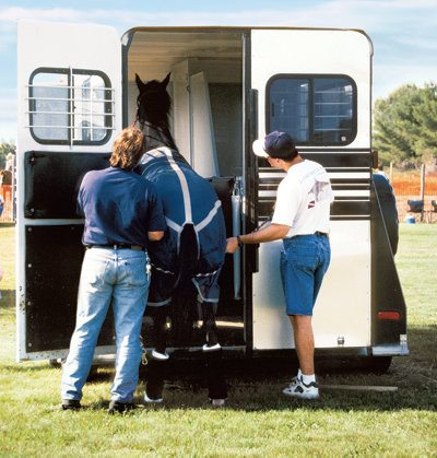 trainers loading a horse into a trailer