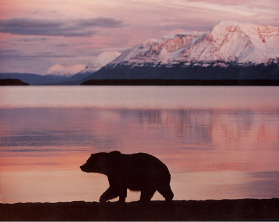 silhouetted grizzly bear in front a lake in Alaska