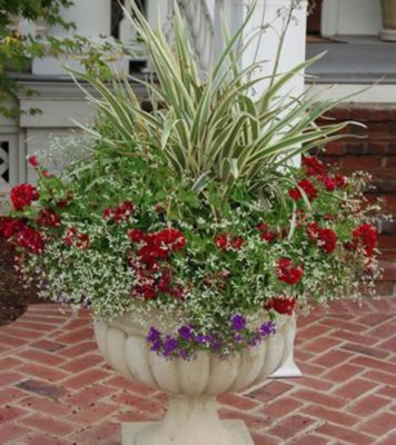 Plant This Container Garden for Summer Sparkle Gardening