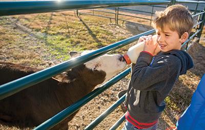 Owen Meyer bottle-feeding a calf