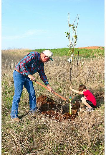 How do you plant fruit trees?