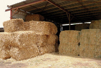 stored hay
