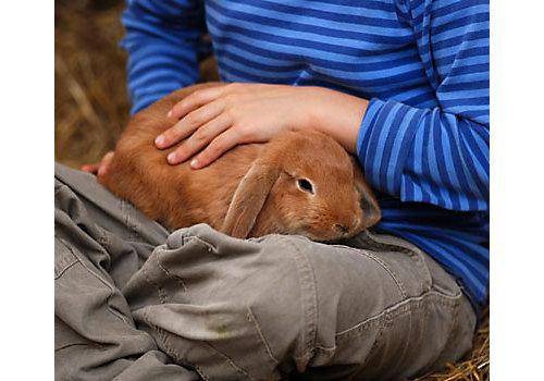 how to make thermocol rabbit