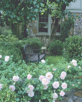 view of a yard with a bench and pink roses growing around the front edge
