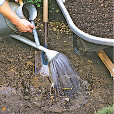 watering the planted rosebush