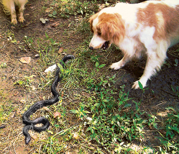 Lily facing down a snake