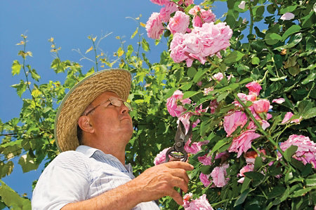 man in a hat standing next to a blooming rose bush