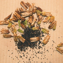 seeds separated from the chaff
