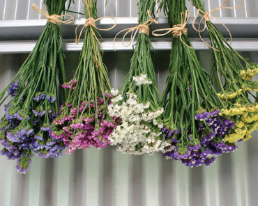 bunches of flowers hanging upside-down to dry