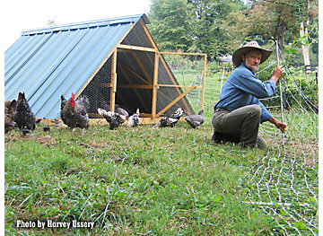Pasturing the chicken flock