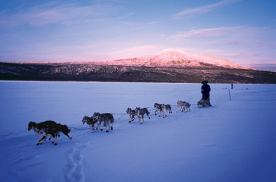 a sled dog racing team in action