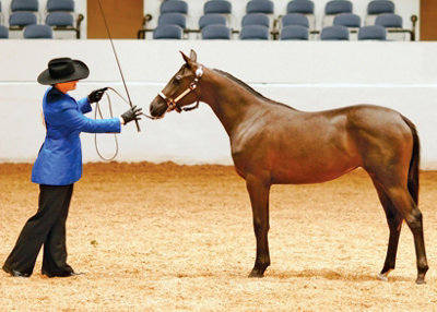 a rider dressed for show checking her horse