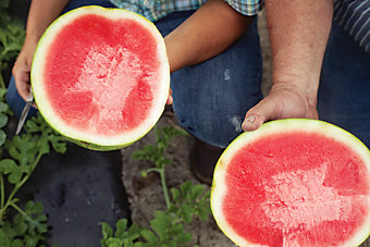two halves of a ripe watermelon