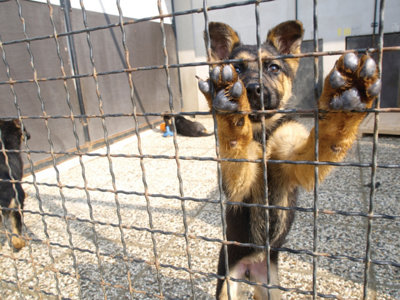 a rescued dog with its paws up on the side of the cage