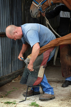 farrier working on a horse's hoof