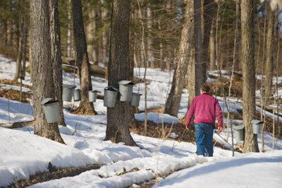 The Bragg family maple tree farm