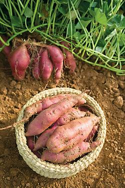 a basket of sweet potatoes