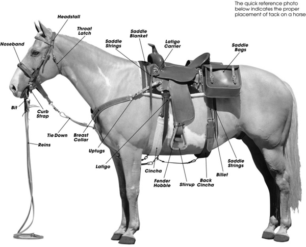 Parts Horse Tack How to Tack up Your Horse For