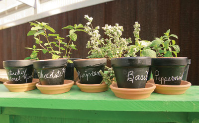 clay pots painted black with different plants in them and the names written in chalk on the sides