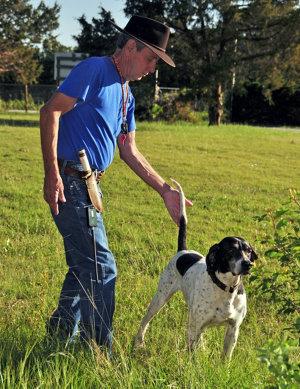 man training a bird dog