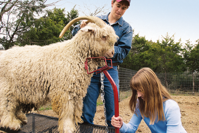 Trace and Darcy Jacoby with an Angora goat