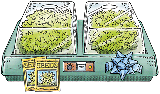 a seed-starting system
