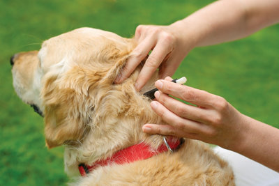 a person's hands checking a dog for ticks