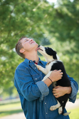 Spencer with a young border collie licking his face