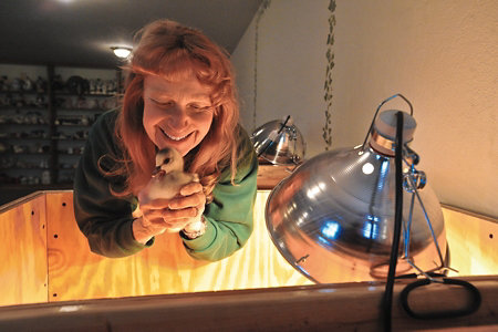 Rosemary holding a baby bird over an incubator box with a lamp shining into the box