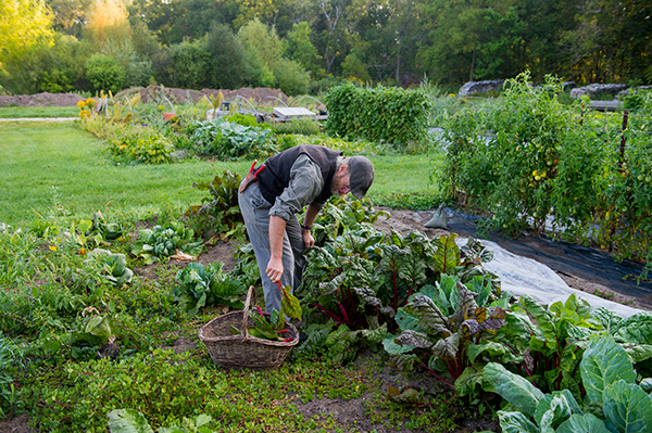 Vegetable Garden - Tractor Supply Co.