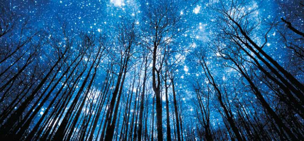 view of the night sky through trees