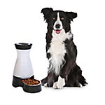 PetSafe Healthy Pet Gravity Dog and Cat Food Station, Stainless Steel Bowl, Holds 4 lb. of Dry Dog or Cat Food, Medium