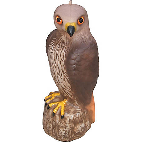 GroundWork Hawk Decoy at Tractor Supply Co