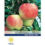 Pirtle Nursery Gala Apple #5, 3.74 gal.
