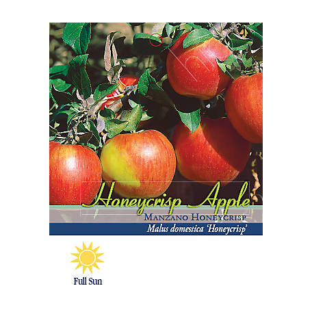 Pirtle Nursery Honeycrisp Apple #5, 3.74 gal.