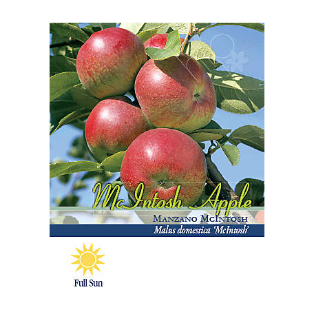 Pirtle Nursery Mcintosh Apple #5, 3.74 gal.