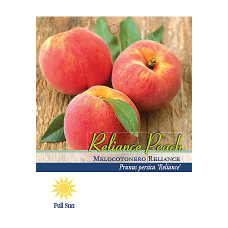 Pirtle Nursery Reliance Peach #5, 3.74 gal.