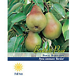 Pirtle Nursery Bartlett Pear #5, 3.74 gal.