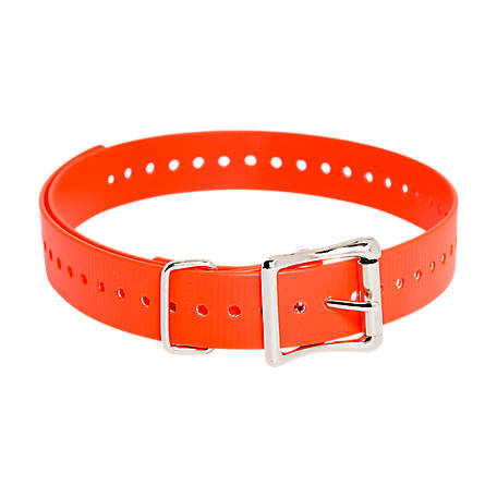 SportDOG Brand Replacement 1 in. Collar Strap, Orange