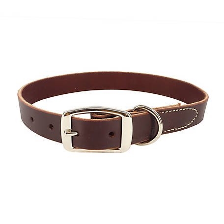 Retriever Latigo Leather Dog Collar
