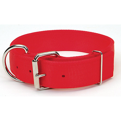 Dog Collars, Leashes & Harnesses