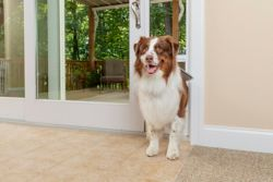 Shop PetSafe Patio Panel Sliding Pet Doors at Tractor Supply Co.