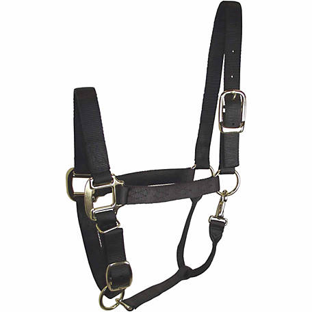 DuMOR Premium Black Halter for Medium Horse