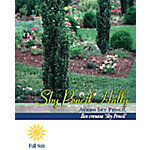 Pirtle Nursery Sky Pencil Holly #3, 2.929 gal.