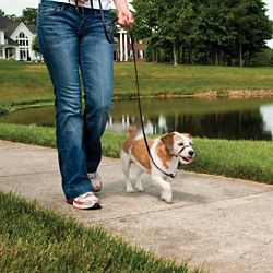 Shop PetSafe Gentle Leader Collar at Tractor Supply Co.