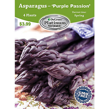 DeGroot Asparagus Purple Passion, 4 Roots, TSVEASPP