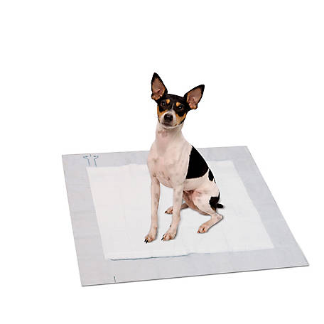 PetSafe Train 'n Praise Moisture Detection Pee Pads, Pack of 30