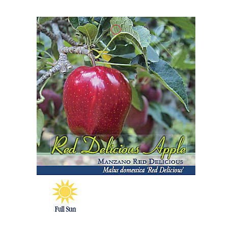 Pirtle Nursery Red Delicious Apple #5, 3.74 gal.