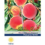 Pirtle Nursery Red Skin Peach #5, 3.74 gal.